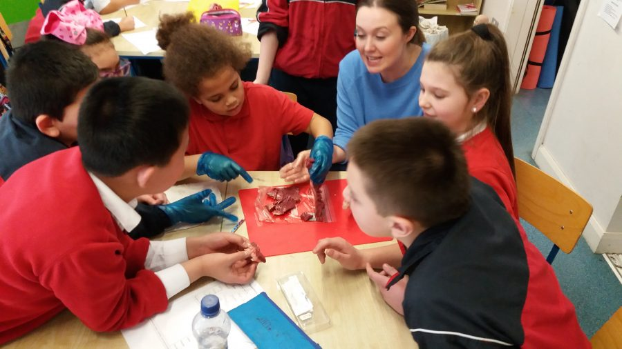 Dr Sammy leads the dissection
